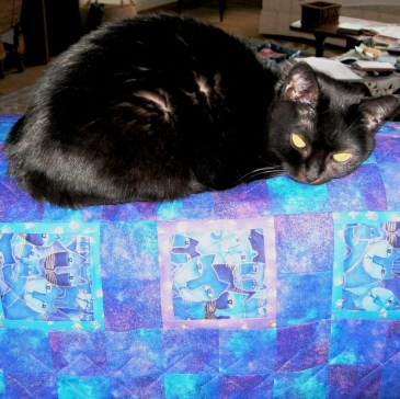 Raven on Healing Quilt
