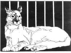 Cougar, Pen and Ink, Constance Perenyi, 1990