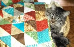 Gabe under quilt