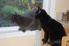 Siberia and Sam watching birds together