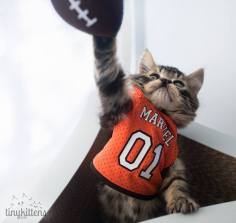 Marvel scores another point for undercats everywhere! Photo courtesy of Shelly Roche